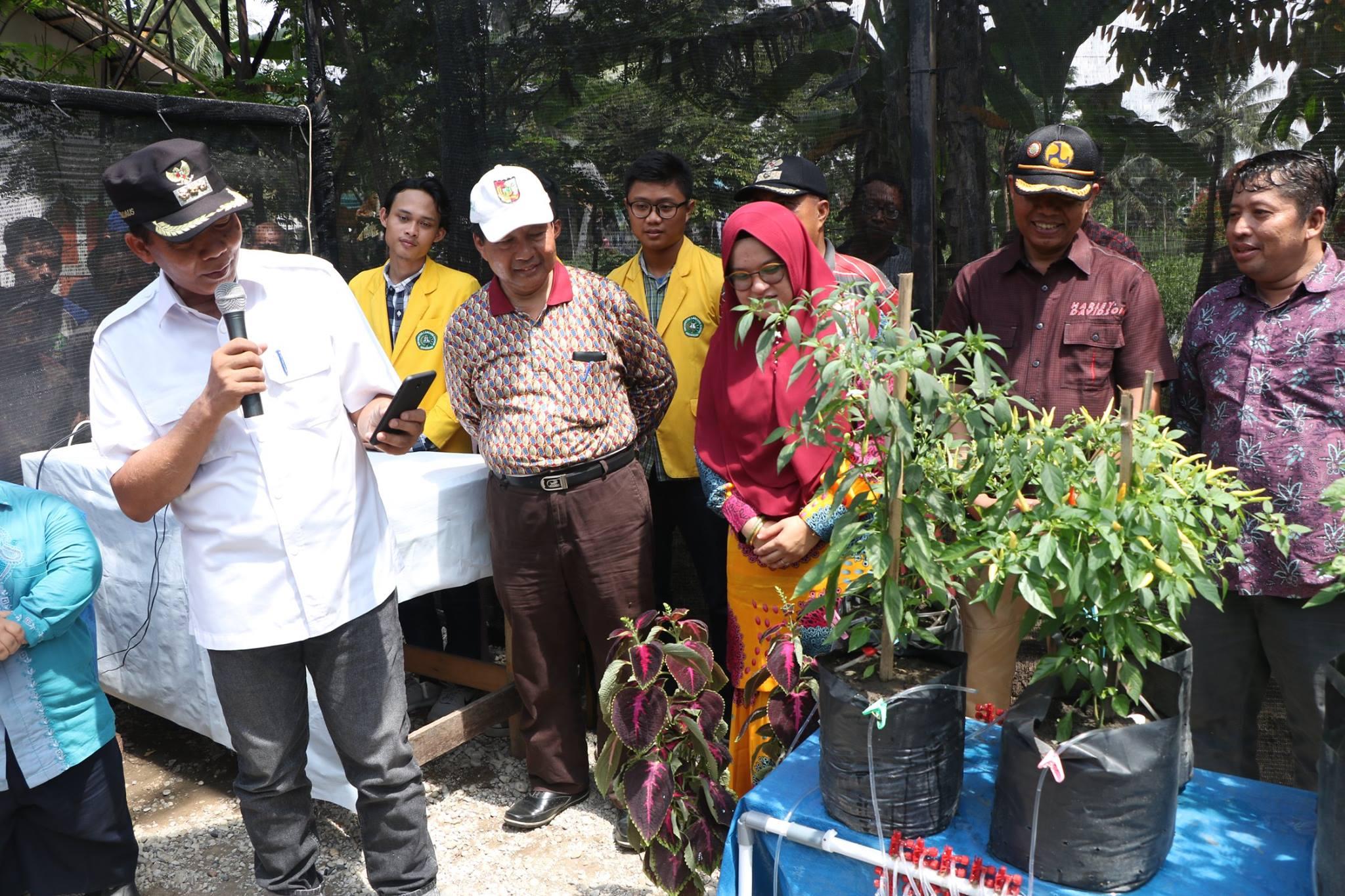 Wali Kota Panen Pedet dan Launching Agrotek Farm System di Kelurahan Agrowisata