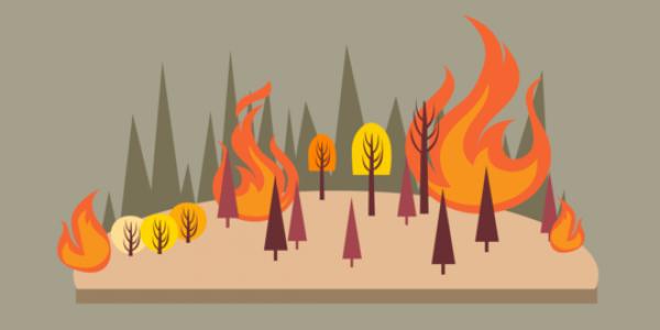 BPBD Pastikan Pekanbaru Nihil Titik Api