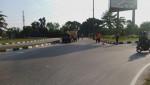 Image : Terjaring di Pintu Masuk Pekanbaru, 12 Warga Pendatang Reaktif Covid-19