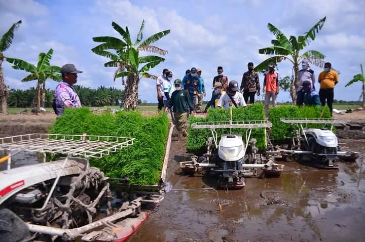 Pemko Kenalkan Padi Jenis Baru ke Para Petani Bunga Raya Siak