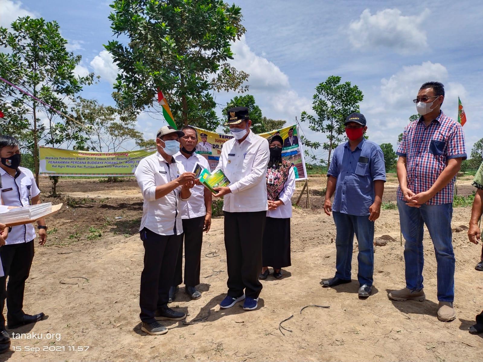Komoditi Porang Tanam Perdana di Kota Pekanbaru