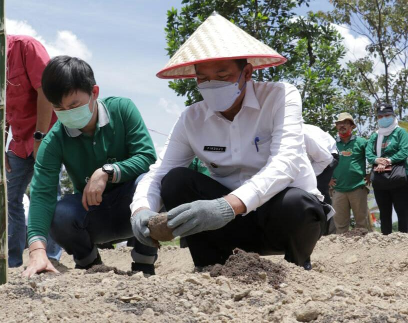 Image : Wali Kota Tanam Bibit Porang di Kelurahan Agrowisata Rumbai Barat